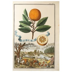 "Copper Plate Engraving of ""Aranzo Dolce"" by Johan Christoph Volckhamer, c. 1708"