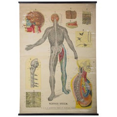 W&A J Johnstons Series of Anatomy, Nervous System