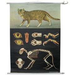 Wall Chart of the Cat by Jung Koch Quentell