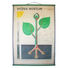"""Wall Chart """"Výživa rostlin"""" Czech Republic, 1960s"""
