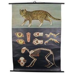 """Wall-School Chart """"Cat"""" from Jung-Koch-Quentell, 1978"""