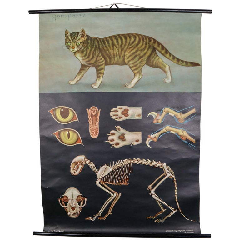 """Wall-School Chart """"Cat"""" from Jung-Koch-Quentell, 1978 For Sale"""