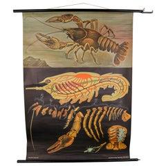 """Wall-School Chart """"Lobster"""" from Jung-Koch-Quentell, 1968"""