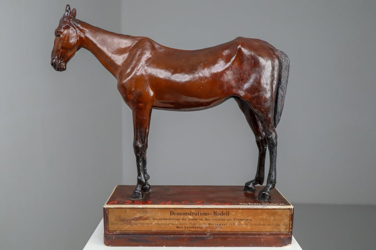 Warm-Blooded Horse Model in Painted Plaster by Max Landsberg, Berlin, 1885 For Sale 1