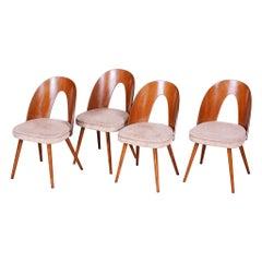 Well Preserved Czech Brown and Beige Chairs by Antonín Šuman, 4 Pcs, 1950s