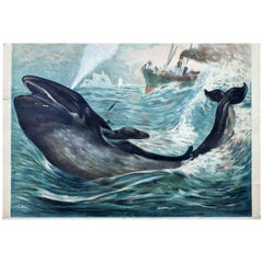 Whaling, Vintage Wall Chart