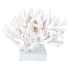 White Branch Coral Sculpture on Lucite