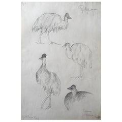 White Cassoary Drawing, Guido Righetti, 1919