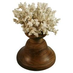 White Coral Set on a Teak Base