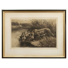 Wildlife Etching by Herbert Dicksee, 'Thirst' Tigers Drinking from the Stream