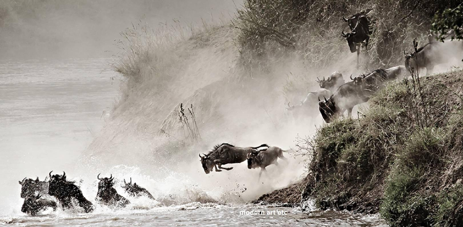 "15x30"" Award winning Wildlife art photo - Wildebeest Migration, Courage (Kenya)"