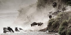 "15x30"" Award winning Wildlife art photo - Wildebeest Migration, Courage (Kenya)"