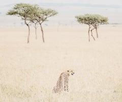 Cheetah n.1 (Kenya) - 20 x 24 in.