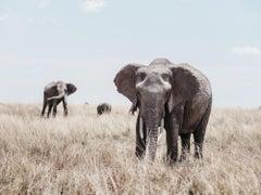 Elephants (Kenya) - 18 x 24 in.