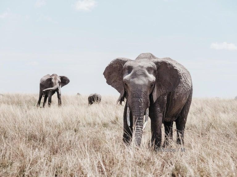 William Chua Black and White Photograph - Elephants (Kenya) - 18 x 24 in.