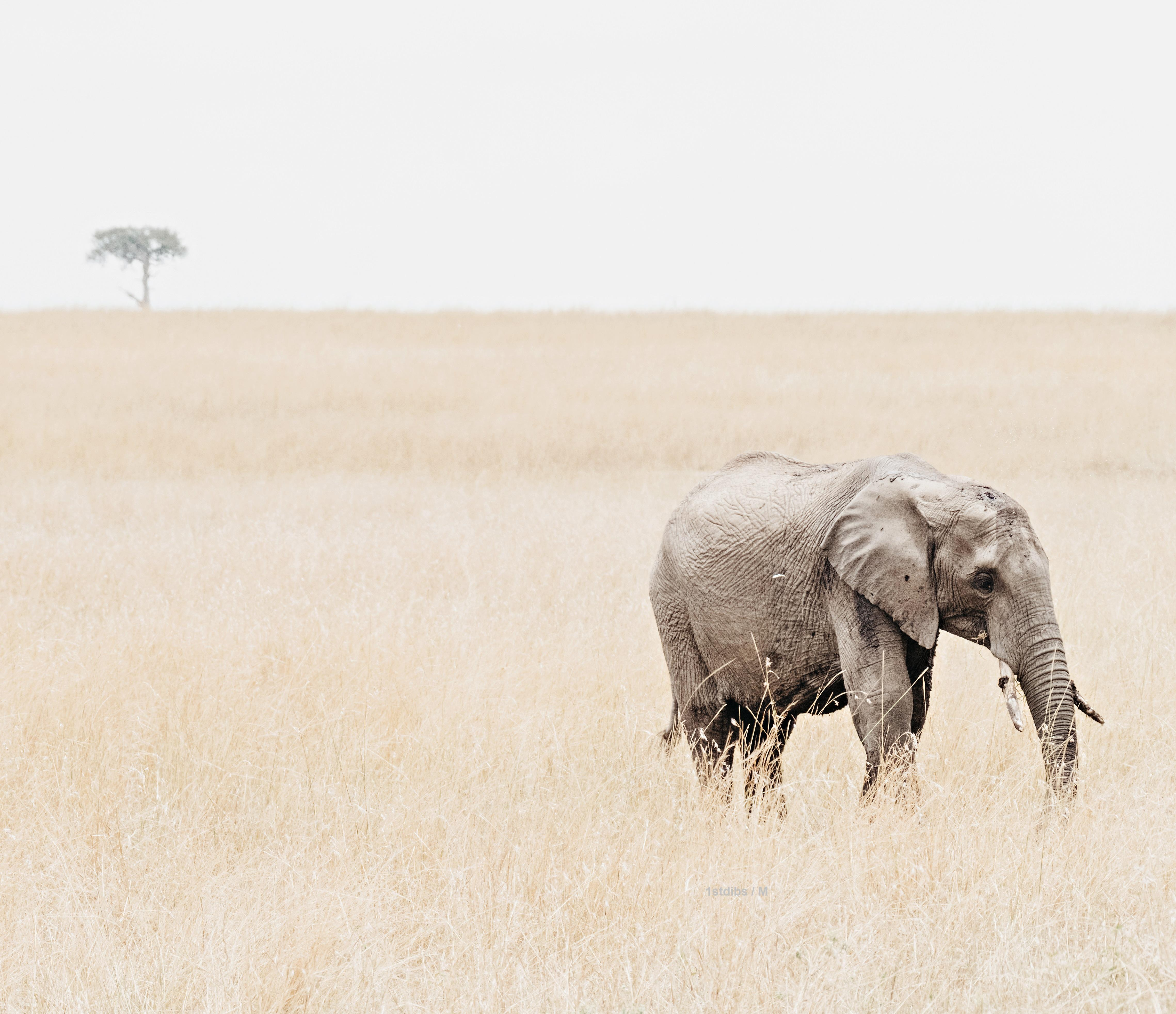 Lone Elephant (Kenya) - 20 x 24 in.