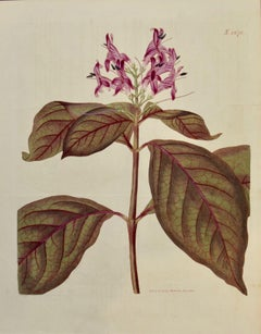 A 19th Century Hand-colored Engraving of a Flowering Justica Plant by Curtis