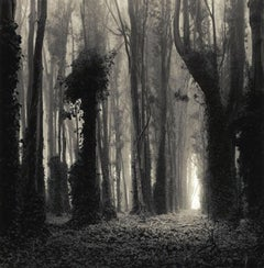 Eucalyptus Grove 12x12 Dreamlike Toned Photograph Numbered Mint Condition
