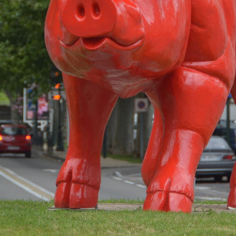 Cloned giant Pig For Sale 1