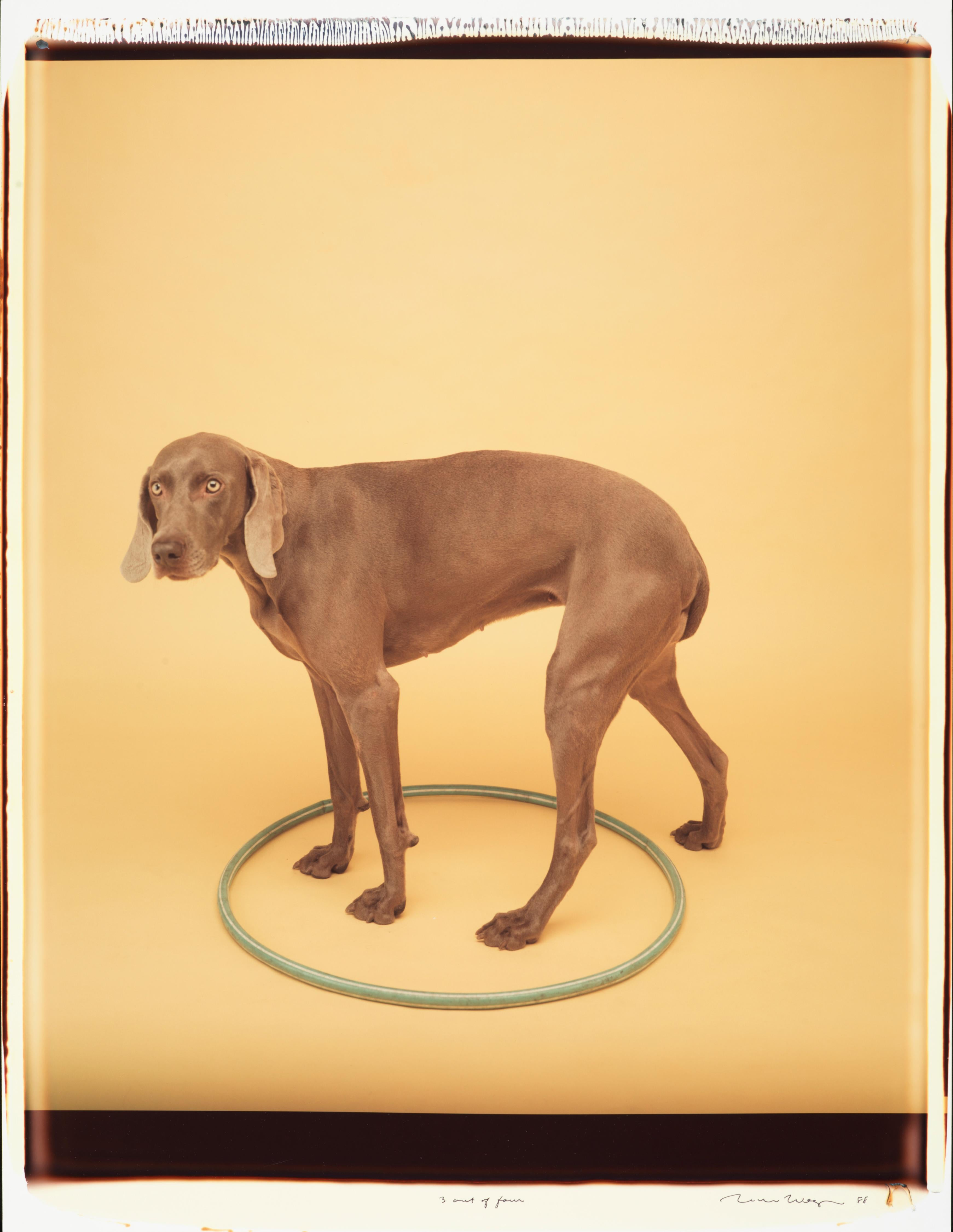 3 Out of Four - William Wegman (Colour Photography)