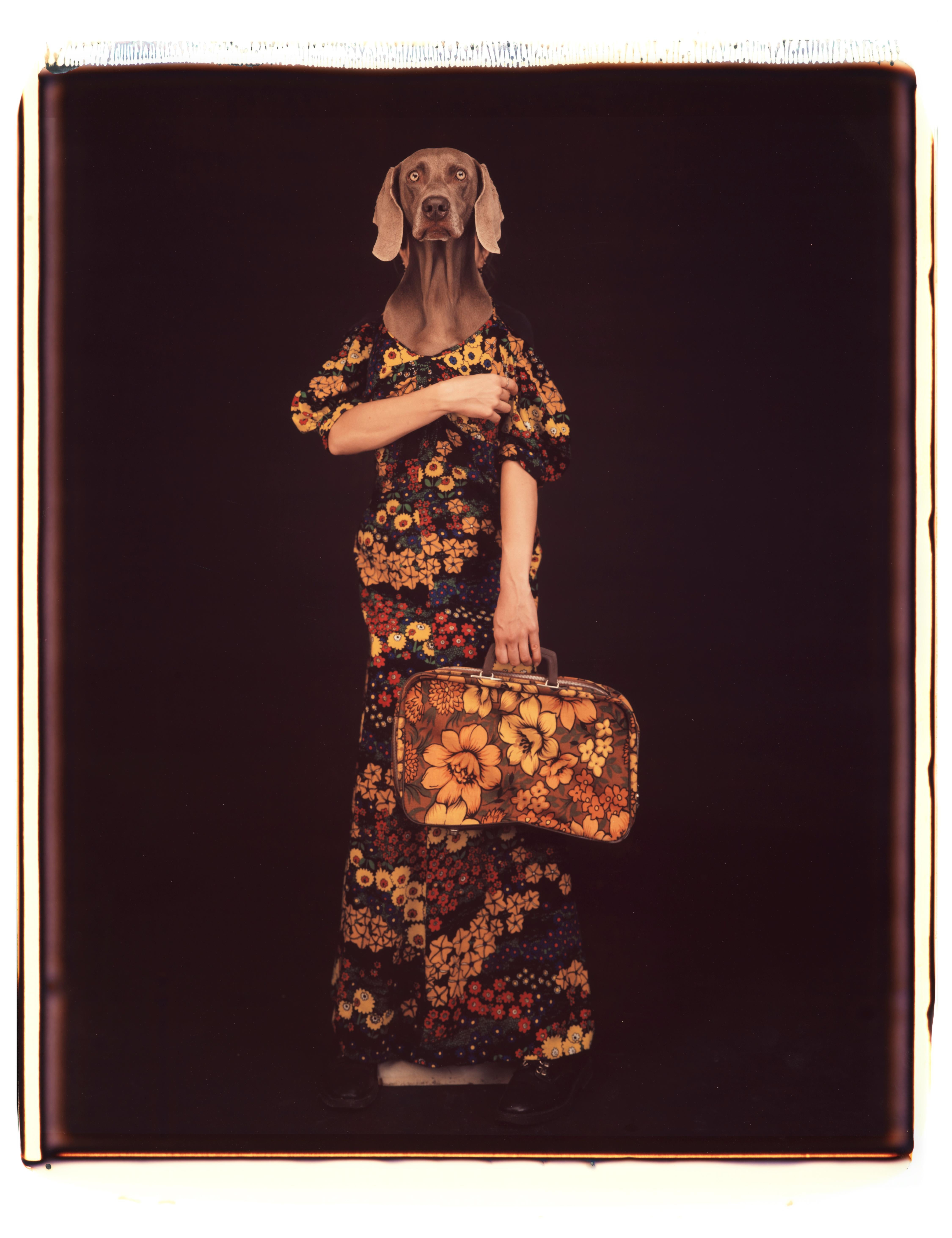 Armed and Matching - William Wegman (Colour Photography)