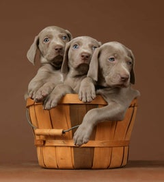 William Wegman - Basketful