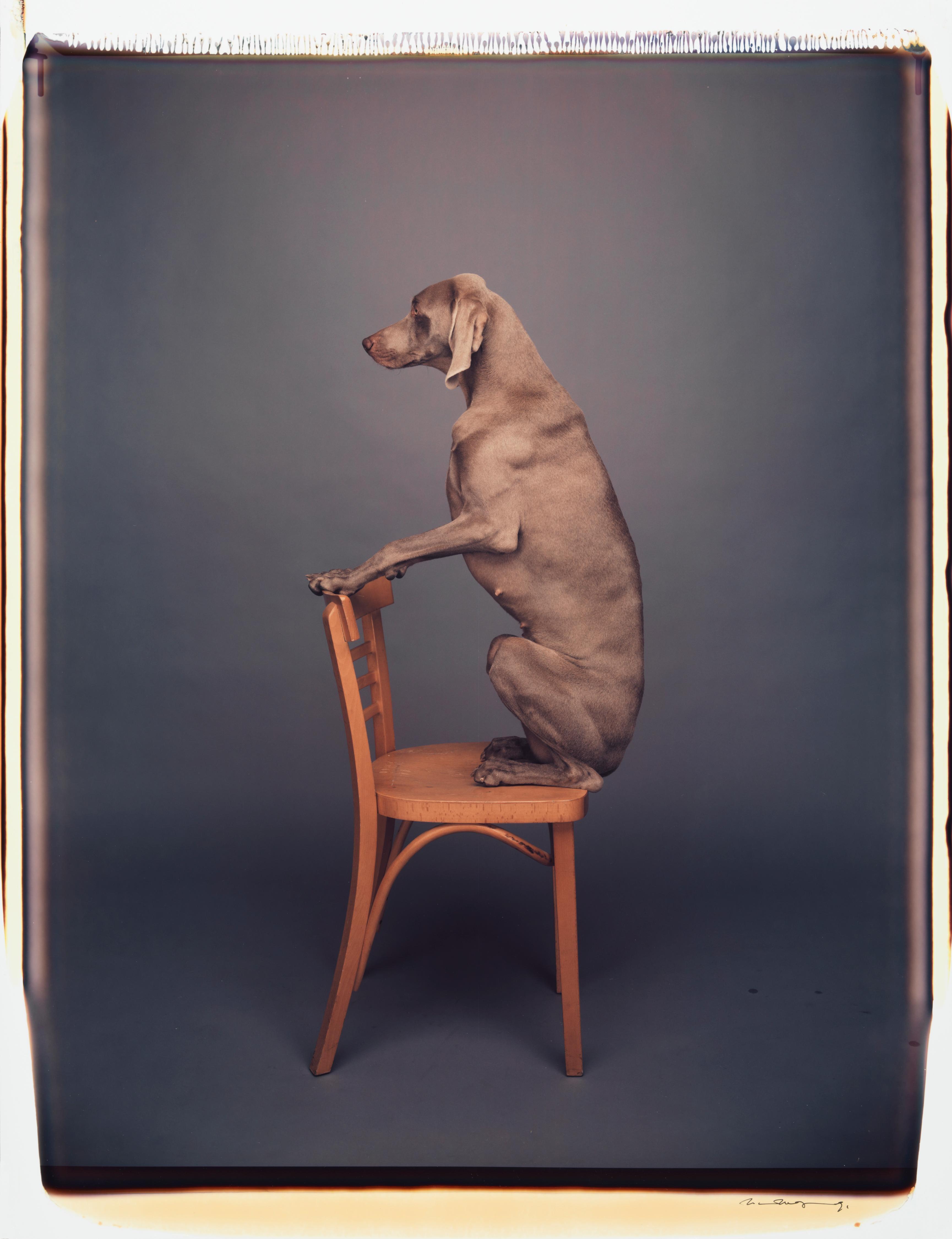 Chair Piece - William Wegman (Colour Photography)