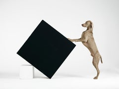 Constructivism - William Wegman (Colour Photography)