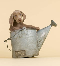 William Wegman - Easy Rider