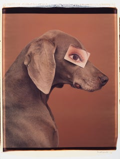 Eyewear II - William Wegman (Colour Photography)