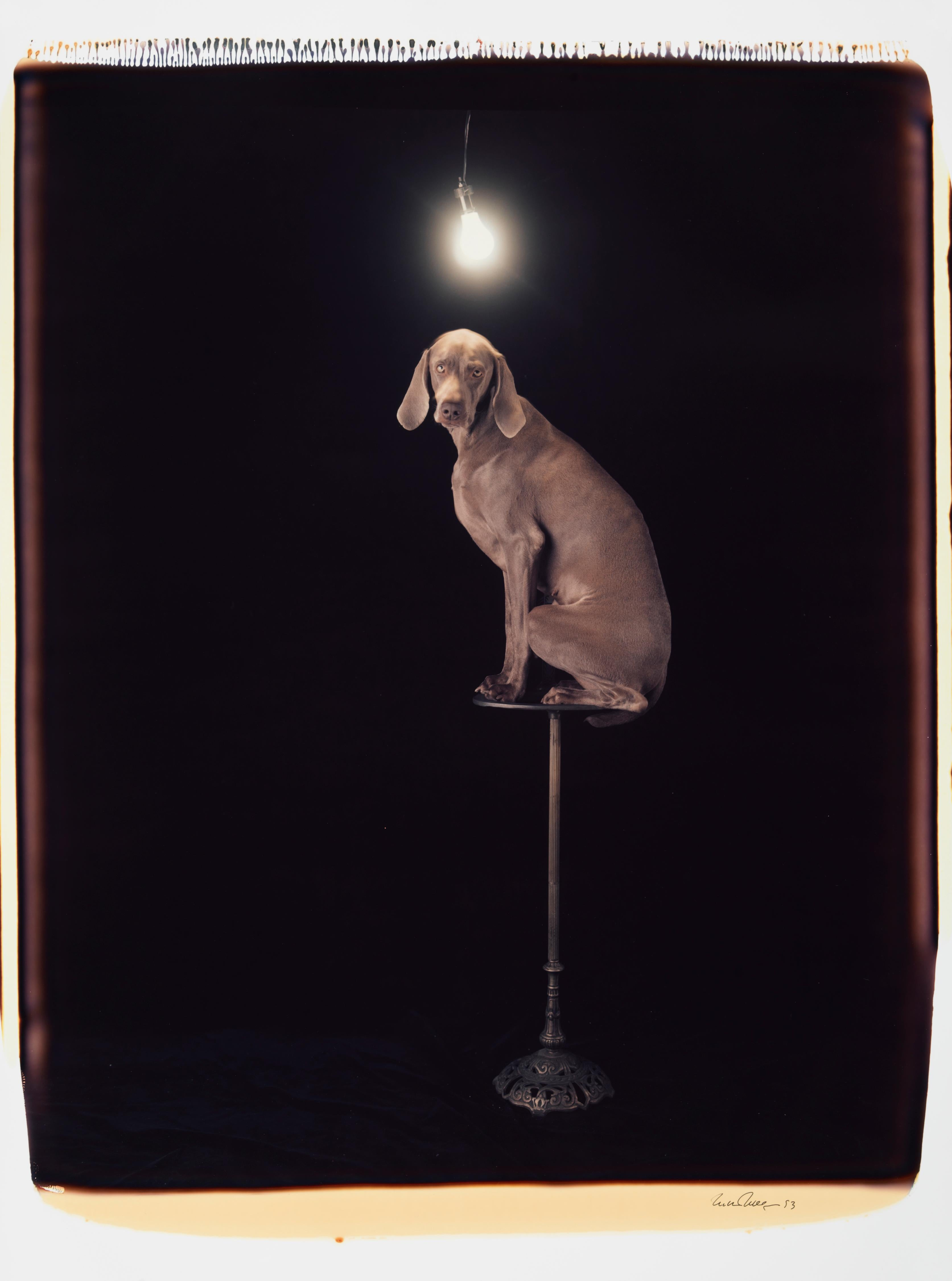 Illuminary - William Wegman (Colour Photography)