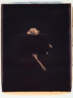 Leg Extension - William Wegman (Colour Photography)