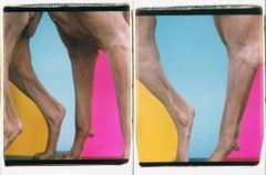 Leggings - William Wegman (Colour Photography)