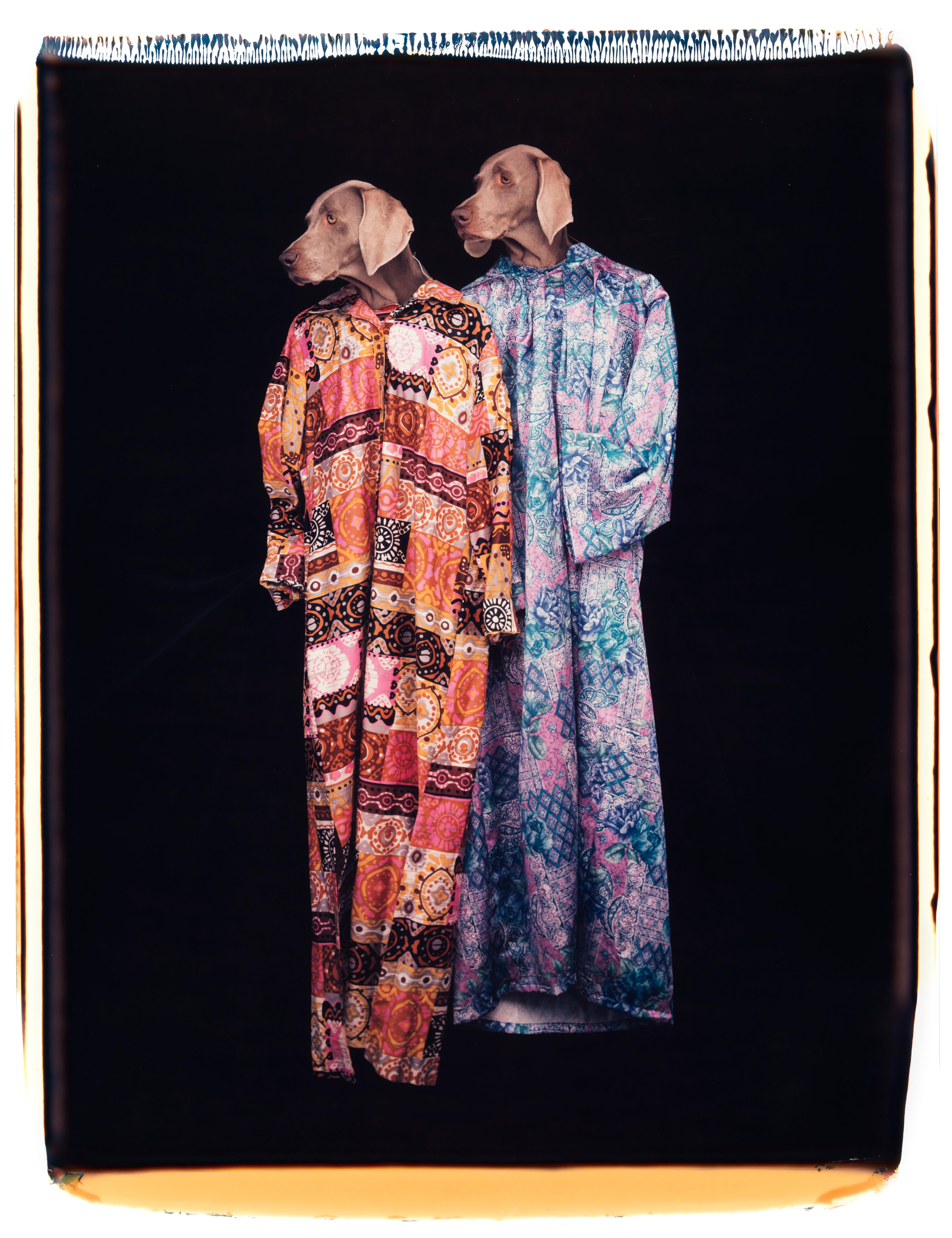 Look There - William Wegman (Colour Photography)