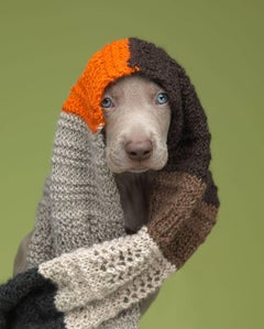 William Wegman - Mixed Media