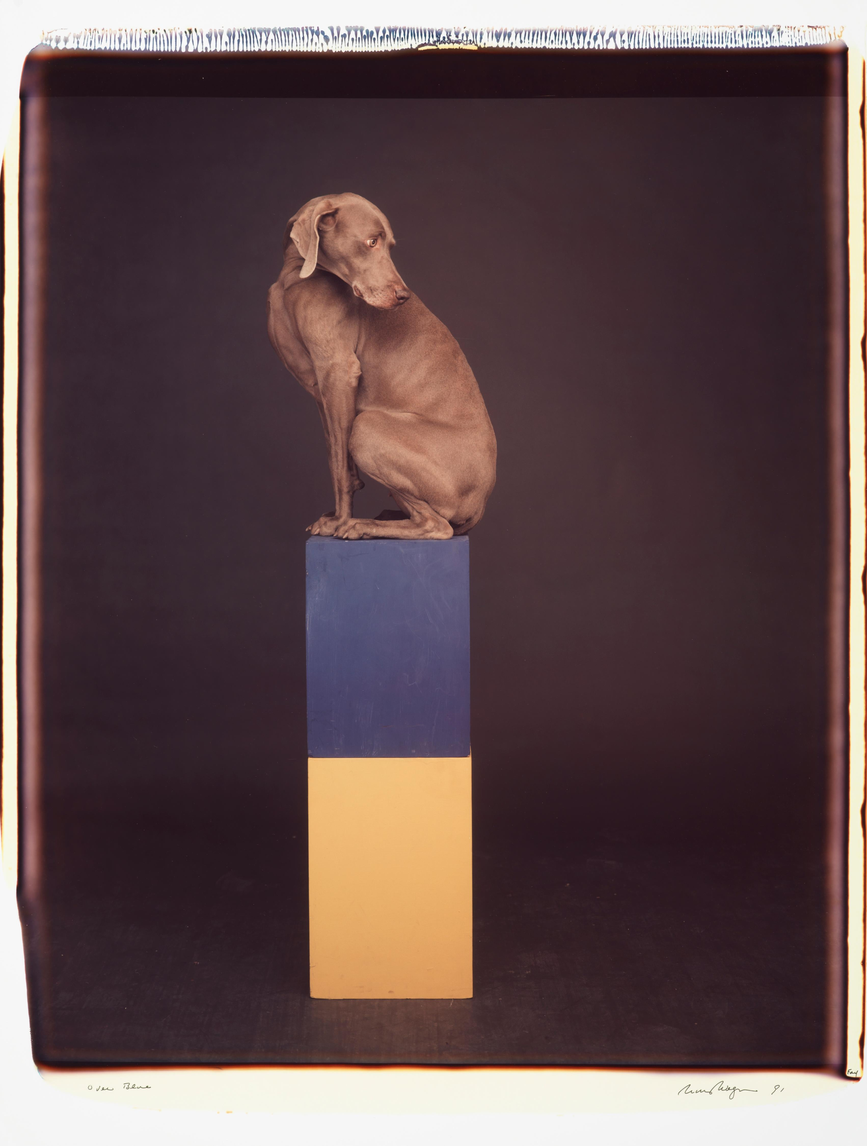 Over Blue - William Wegman (Colour Photography)