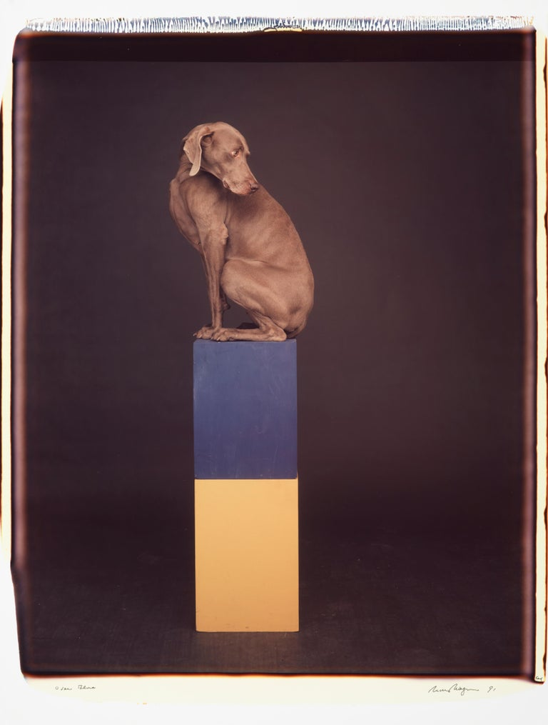 Over Blue - William Wegman (Colour Photography) - Black Color Photograph by William Wegman
