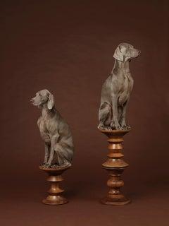 Pawns - William Wegman (Colour Photography)
