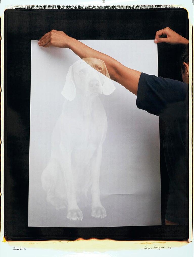 Presentation - William Wegman (Colour Photography) - Gray Color Photograph by William Wegman