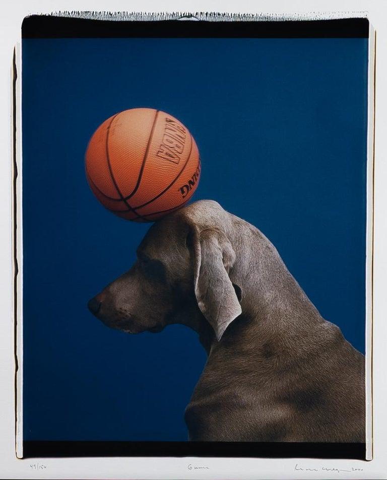 William Wegman Animal Print - Game