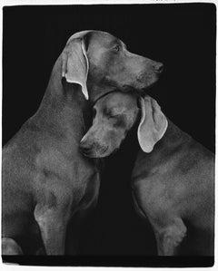 William Wegman, Friends, 2010, Pigment Print