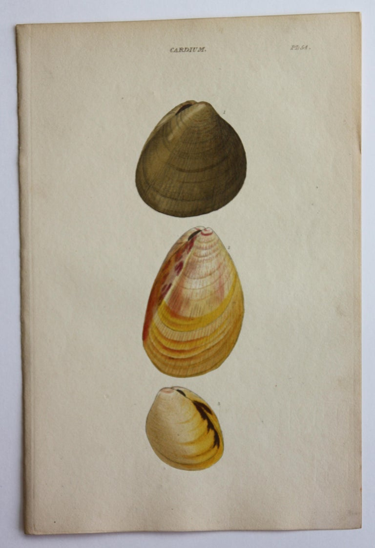 42 Hand-Colored Antique Prints of Shells by William Wood For Sale 11