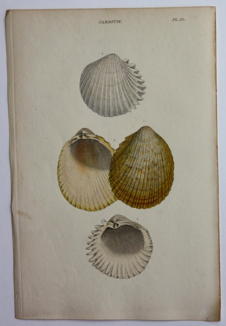 42 Hand-Colored Antique Prints of Shells by William Wood For Sale 12