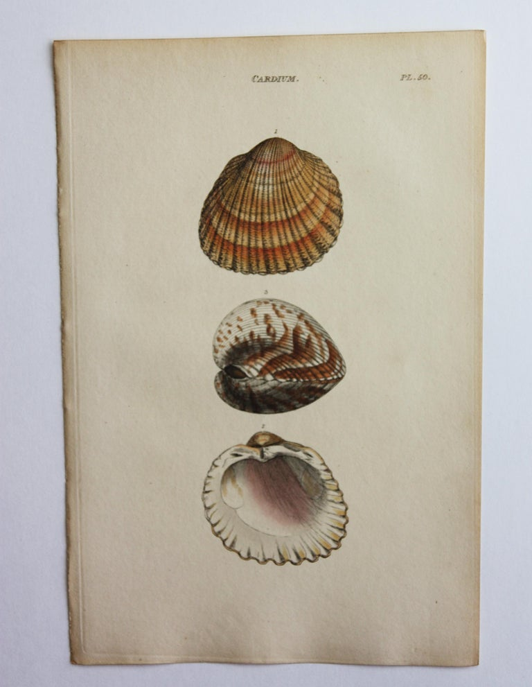 42 Hand-Colored Antique Prints of Shells by William Wood For Sale 4