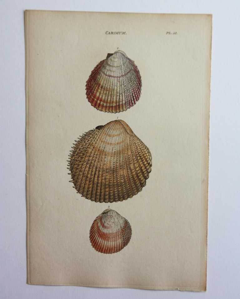 42 Hand-Colored Antique Prints of Shells by William Wood For Sale 6