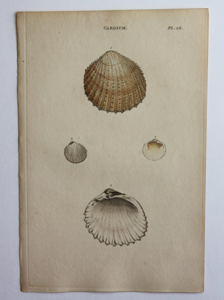 42 Hand-Colored Antique Prints of Shells by William Wood For Sale 8