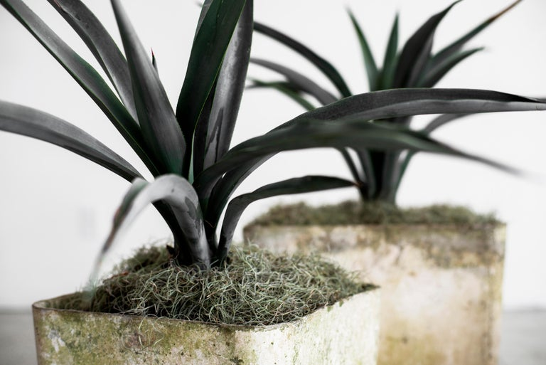 Fantastic cement planter by Willy Guhl. Square shape. Priced individually, this is for the single larger size 18 7/8 W x 18 7/8 D x 15 5/8