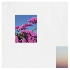 Windows, Summer Wallpaper