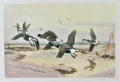 Black Geese