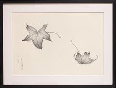 Pencil on paper - Study of Leaves, 2014, (Framed)